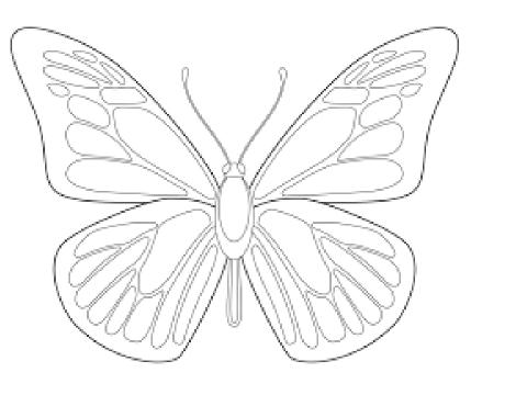 树手蝴蝶手绘